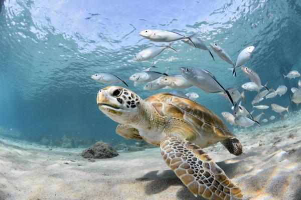 Animales marinos: características, tipos y lista