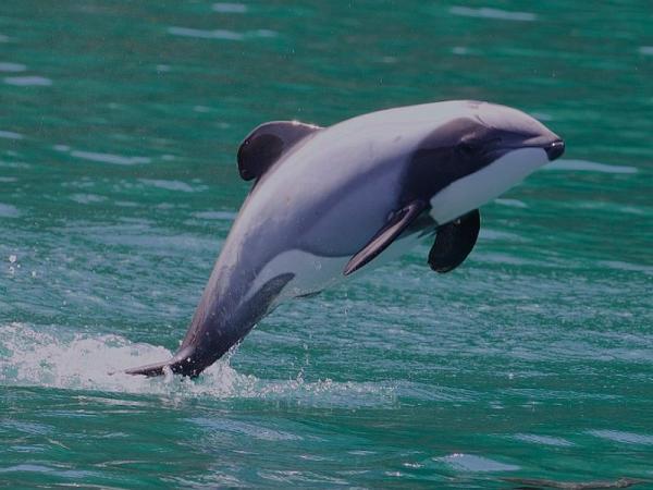 Animales marinos: características, tipos y lista - Animales marinos en peligro de extinción