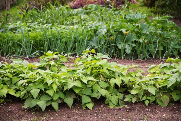 Qué es la rotación de cultivos: tipos y beneficios - Beneficios de la rotación de cultivos