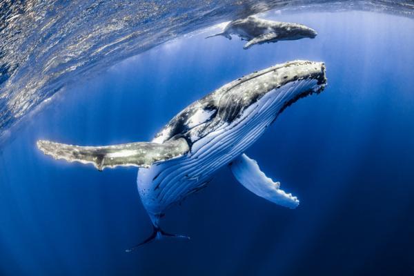 Animales marinos: características, tipos y lista - Características de los animales marinos
