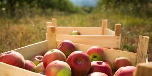 Cuáles son los alimentos ecológicos: qué son y ejemplos
