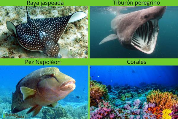 Animales marinos: características, tipos y lista - Otros nombres de animales del mar