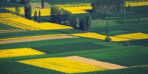 Qué es la rotación de cultivos: tipos y beneficios