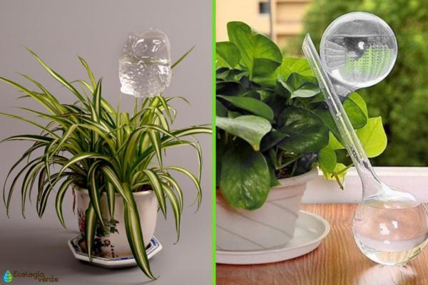 Cómo regar las plantas en vacaciones - Cómo usar bombillas de riego para las plantas