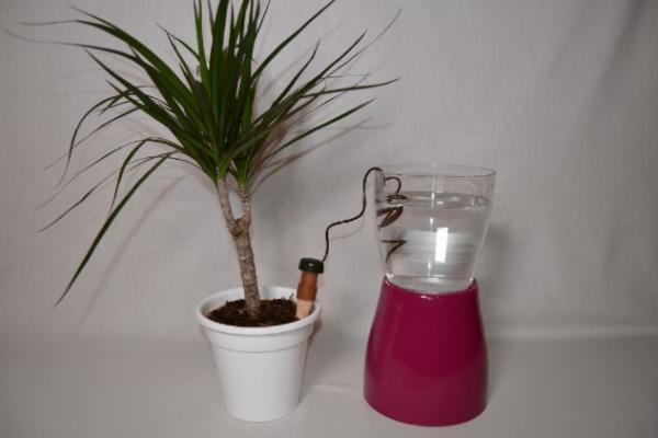 Cómo regar las plantas en vacaciones - Cómo usar conos de cerámica para regar las plantas