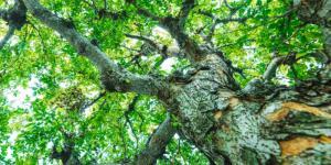 Plantas leñosas: qué son, características y ejemplos