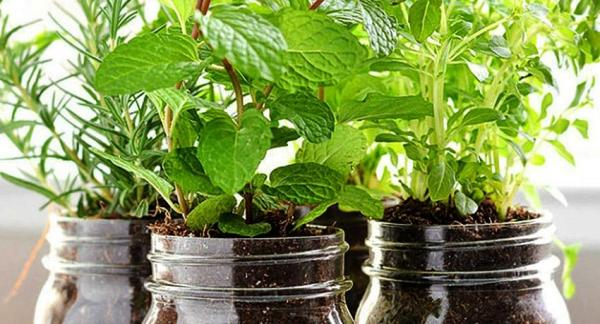 Cómo cultivar hierbas aromáticas en casa - La tierra y el abono