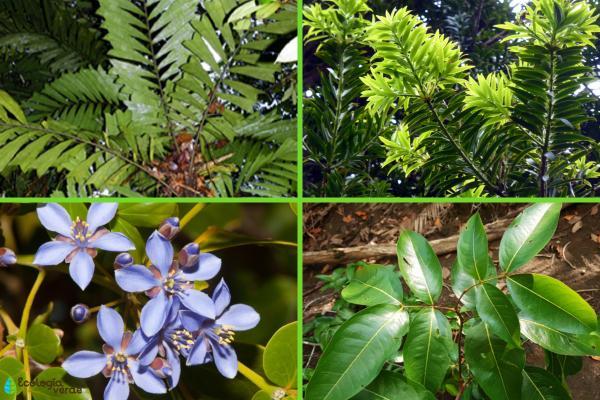 Plantas en peligro de extinción en Colombia - Otras plantas en peligro de extinción en Colombia