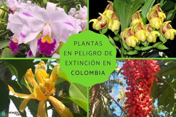 Plantas en peligro de extinción en Colombia