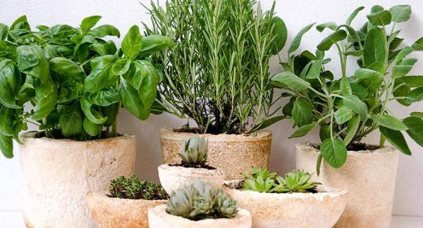 Cómo cultivar hierbas aromáticas en casa - ¿Qué plantas elegir?