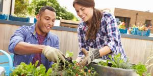 Qué plantar en un huerto urbano