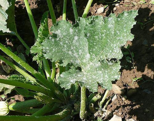 Por qué crecen hongos en mi jardín y cómo eliminarlos - Cómo eliminar los hongos en el jardín o césped