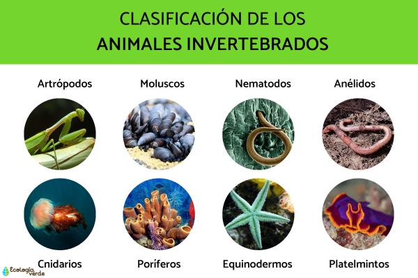 Animales Invertebrados Ejemplos Y Caracteristicas Con Fotos