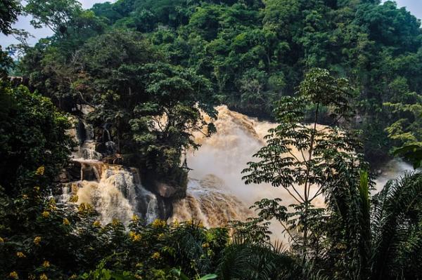 Selva del Congo: características, flora y fauna - Características de la Selva del Congo