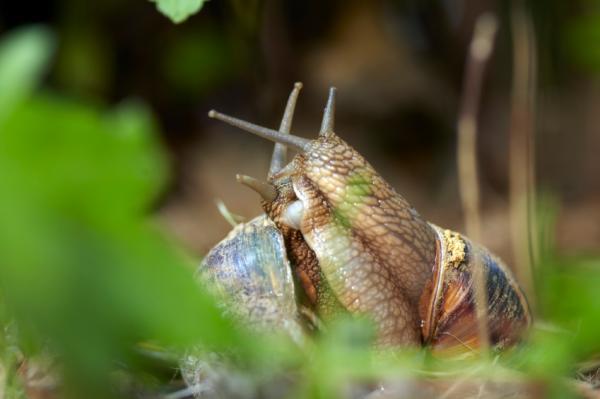 Animales invertebrados: ejemplos y características - Moluscos, otro grupo muy conocido de animales invertebrados