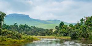Selva del Congo: características, flora y fauna