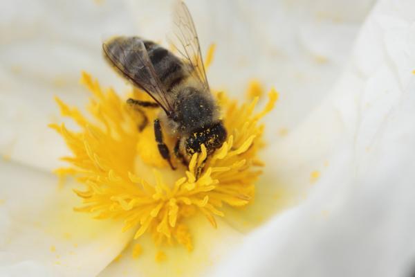 Qué es el néctar y su función - Qué es el néctar de las flores