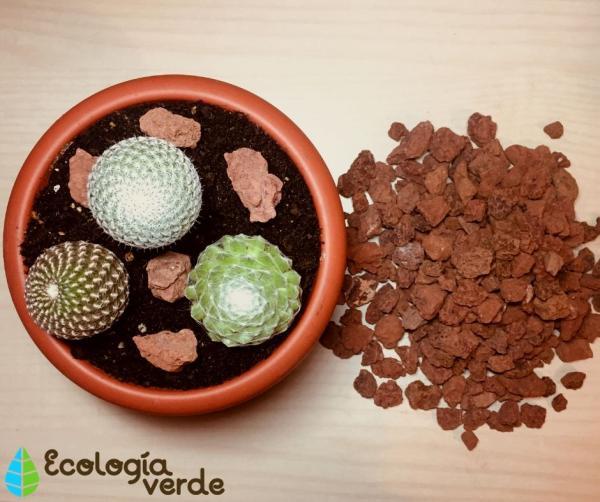 Sustrato para cactus y suculentas: cómo hacerlo