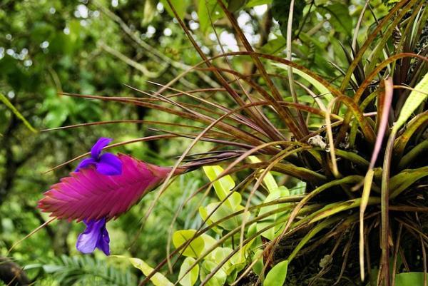 Plantas del Amazonas con sus nombres - Plantas del Amazonas con sus nombres - listas por tipos