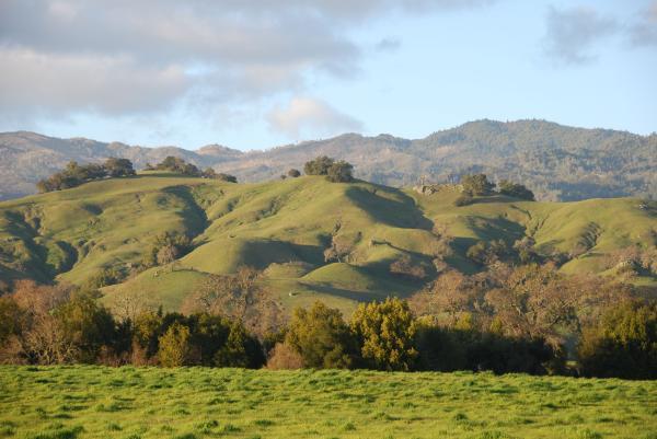 Ecosistema montañoso: características, flora y fauna - Ecosistema montañoso: características