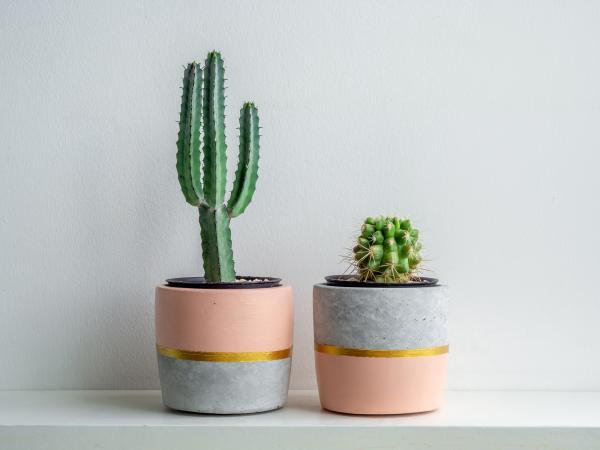 Dónde colocar los cactus según el Feng Shui