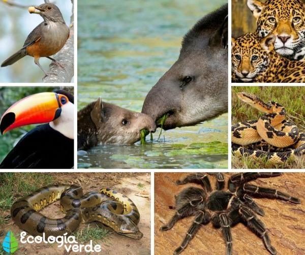 Flora y fauna de Brasil - Fauna de Brasil - animales típicos