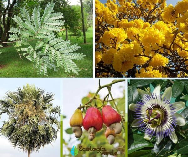 Flora y fauna de Brasil - Flora de Brasil - plantas típicas