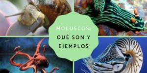 Moluscos: características, tipos y ejemplos