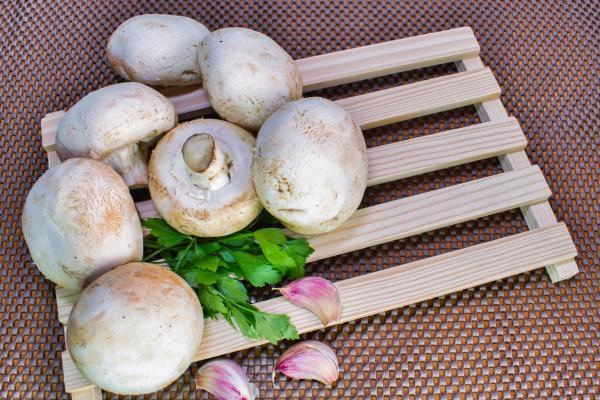 Cuáles son los hongos comestibles - Champiñon
