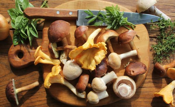 Cuáles son los hongos comestibles