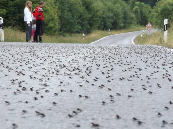 Por qué llueven ranas del cielo - Explicación científica de por qué llueven ranas del cielo