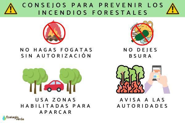 Cómo prevenir los incendios forestales