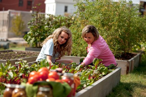 Qué es la alimentación ecológica - Cómo es la producción de alimentos ecológicos