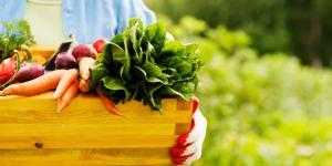 Qué es la alimentación ecológica