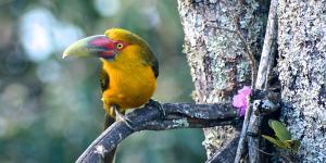 Características principales de las aves para niños