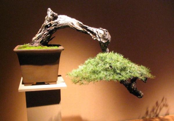 19 tipos de bonsái - Kengai y Han Kengai