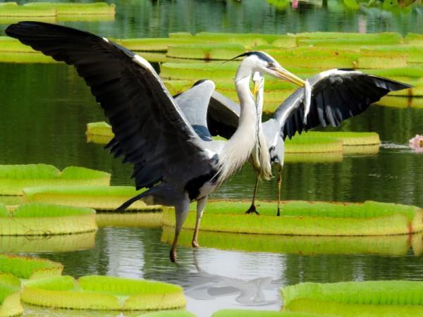 Características principales de las aves para niños - Qué comen las aves