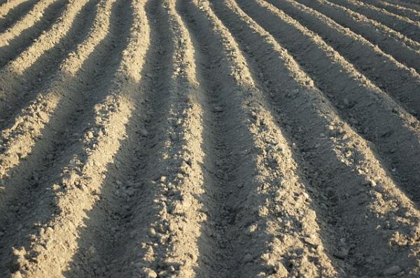 Técnicas de cultivo de agricultura ecológica - La técnica del laboreo del suelo en la agricultura ecológica