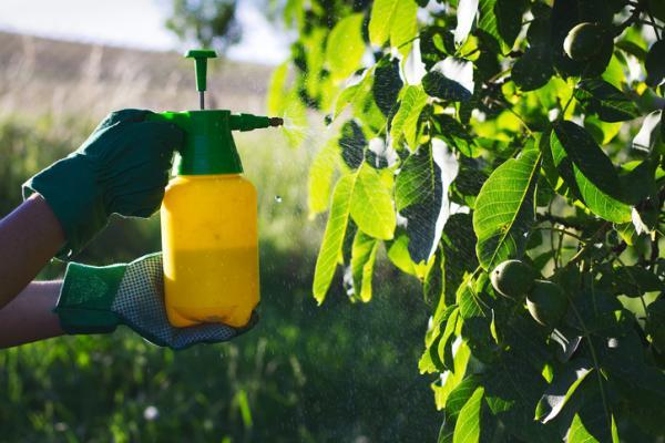Fungicidas caseros para árboles frutales - Qué son los hongos