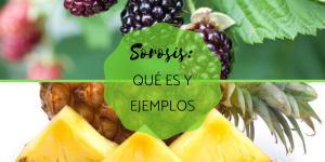 Sorosis: qué es y ejemplos