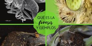 Foresis: qué es y ejemplos