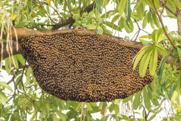 Características de las abejas - Dónde viven las abejas