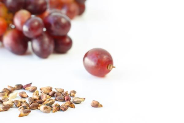 Germinar semillas de uva: cómo hacerlo y cuidados - Cómo germinar semillas de uva paso a paso