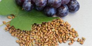 Germinar semillas de uva: cómo hacerlo y cuidados