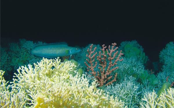 Acidificación De Los Océanos Qué Es Causas Y Consecuencias