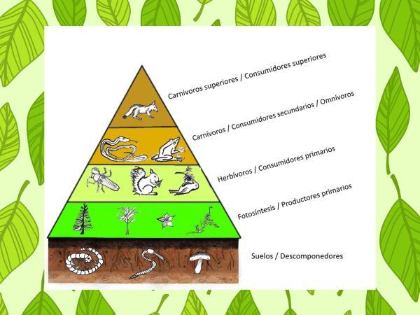 Qué son las pirámides ecológicas y sus tipos - La energía en el ecosistema
