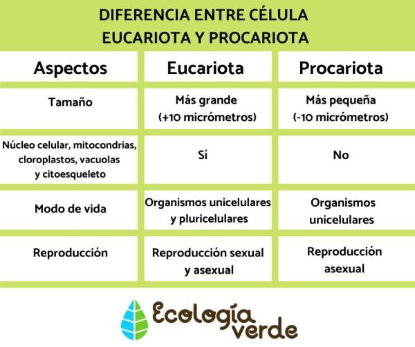 Diferencia entre célula eucariota y procariota -  Diferencia entre célula eucariota y procariota - resumen