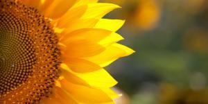 Plantas herbáceas: características y ejemplos