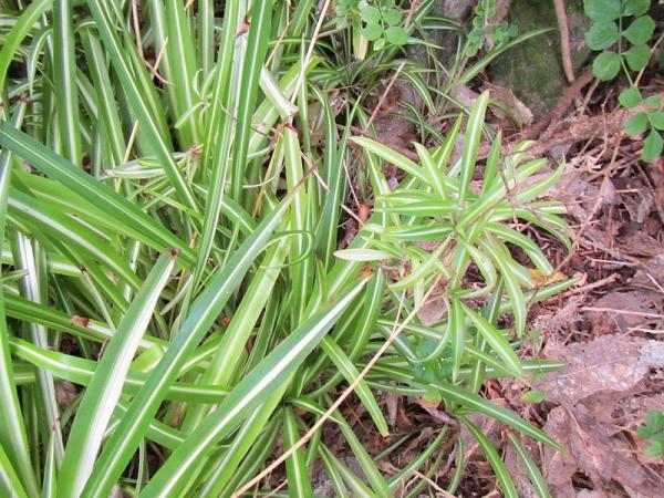 Plantas herbáceas: características y ejemplos - Qué son las plantas herbáceas y sus características