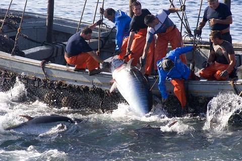 La explotación animal - Caza y pesca